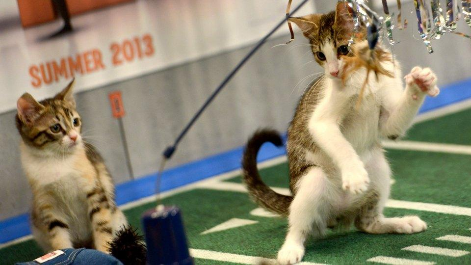 Finally, someone has made a football league for kittens