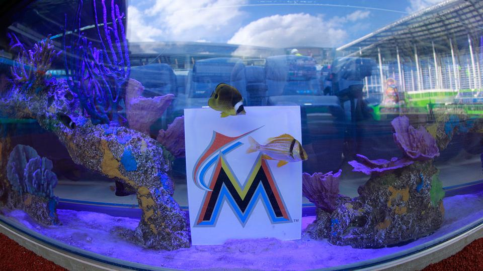 Fish swim in one of the aquarium tanks located behind home plate at Miami's Marlins Park.