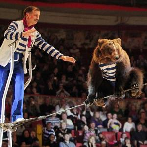 Welcome to Did You See That?, the gallery that bearly crosses the high wire between the worlds of sports and pop culture. This Russian troupe boasts four bruins that have completed the rigorous three-year training program required to do the job safely.