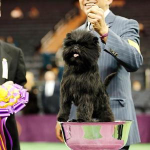 Banana Joe took home the title of best in show from the 137th Westminster Kennel Club dog show and he's got the hardware to prove. He can even fit inside of his trophy. Here's a look back at some past champions plus other SI favorites from the Westminster dog show's history.