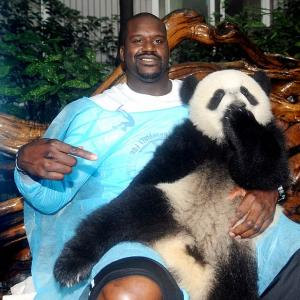 The giant panda may be an endangered species, but the bamboo-loving bears can't hide from athletes. SI.com proudly presents our favorite athlete and panda moments, starting with this gem from Shaq.