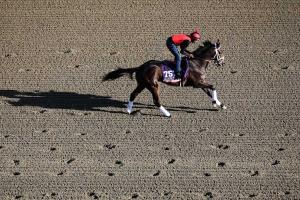 My Conquestadory finished fourth in last year's Breeders' Cup Juvenile Fillies for owner Ernie Semersky.