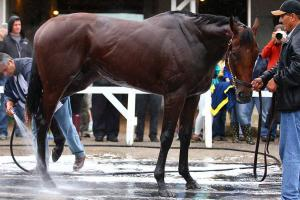 Can American Pharoah win Belmont? Nobody knows anything