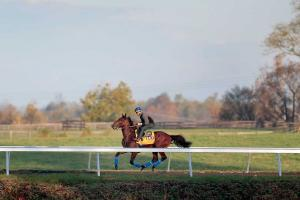 Breeders' Cup to be farewell for American Pharoah