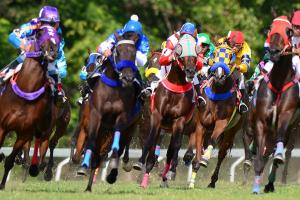 Flashcards: Brush up on your horse racing terms