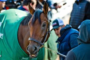 Preakness Stakes: Full betting odds