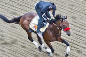 Preakness Stakes prop bet odds: Betting lines