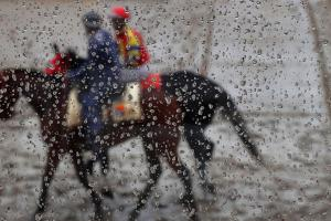 Two horses die after Preakness undercard races