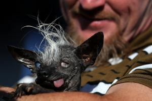 Super-ugly dog named World's Ugliest Dog
