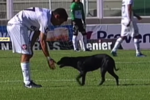 Adorable puppy interrupts international soccer match