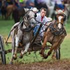 The National Championship Chuckwagon Race is held every Labor Day weekend in Clinton, Arkansas.  There are six classes of wagon races using mules or horses, pulling different types of wagons.  As one of the largest equestrian gatherings in the country, it draws over 5000 horses and mules.  Many of these animals are used as trackside seating for some of the 20,000 plus spectators at the event.