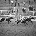 Pleasant Colony won six of 14 career starts including the 1981 Kentucky Derby and Preakness. His bid for the Triple Crown ended when Summing beat him by 1 1/2 lengths in the Belmont.