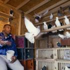 Mike Tyson spends some quality time with his pigeons.