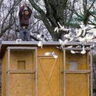 Mike Tyson poses outside of his pigeons coop in Catskill, N.Y.