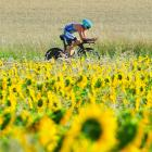 A cyclist competing in the bike leg of Challenge Roth rides though the countryside of Roth, Germany, past a field of sunflowers .