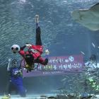 """A diver wearing a South Korean soccer fan uniform performs with sardines during an event to promote the 2014 Brazil World Cup, at the COEX Aquarium in Seoul, South Korea, Monday, June 9, 2014. South Korea will face Russia, Belgium and Algeria in the 2014 Brazil World Cup. The writing on the banner reads """" We hope for the success of the national soccer team."""""""