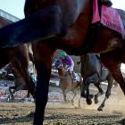 California Chrome heads toward the finish line to finish fourth in the Belmont.
