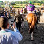 California Chrome, with Victor Espinoza, walks from the paddock to the track before competing in the Belmont Stakes.