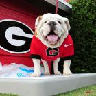 The Fast & Furious of mascots, Uga will never end because Uga will always be a hit.