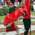 A member of the University of Georgia color guard reacts as UGA VI leaps at a flag before the start of Georgia's 2004 game against Georgia Southern. UGA V made headlines in 1996, when he lunged at Auburn receiver Robert Baker after Baker scored a touchdown.