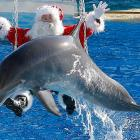 Season's greetings and welcome to <italics>Did You See That?</italics>, the gallery with great porpoise.