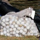 Police in suburban Philadelphia arrested on charges of trespassing and theft four people?some in scuba gear?who had been diving into country club ponds and reselling the roughly 8,000 golf balls that they retrieved. <italics>April 30 issue</italics>