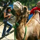Parker waits for girlfriend Eva Longoria to board a camel during their visit to the Great Wall of China In July 2005. Parker and four other NBA players were in the Chinese capital to conduct a basketball camp.