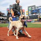 Ballpark Dogs