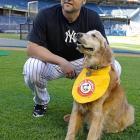 Chase retrieves bats for the Yankees minor league team, the Trenton Thunder.