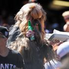 Welcome to another installment of <italics>Did You See That?</italics> You ain't seen nothing Yeti. So grab yourself a cold one and Chewbacca on this collection of fine photography from AT&T Park in San Francisco and other hotspots in the world of sports, pop culture and haute couture.