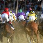 Riders and horses in action at the Preakness. California Chrome (purple) and jockey Victor Espinoza went on to victory, following up their Kentucky Derby win.