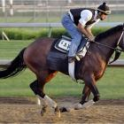 After starting 2006 with back-to-back victories in Florida and then a game second in the Gotham Stakes at Aqueduct on March 18, trainer Todd Pletcher's horse was made the odds-on favorite in the Wood Memorial. He faded in the final furlong, prompting speculation that he is a miler at heart. Perhaps he can someday be taught to milk his quickness for a longer distance, but is that likely to happen in a speed-heavy, 20-horse race under a jockey who thrives on getting horses to run fast?