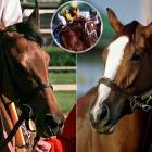 For the 20th straight year, the betting favorite failed to win it all. In 1999, both of Bob Baffert's horses entered the race with 9-2 lines, but Excellent Meeting (left) finished fifth while General Challenge (right) took 11th. The winner? Charismatic. With 30-1 odds, Charismatic (inset) moved up from the middle of the back to take the lead for good.