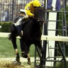 A tough son of 1977 Derby and Preakness winner Seattle Slew, Swale was an 8-to-10 favorite to win the Preakness after a victorious Derby run.  He came in seventh as Gate Dancer came away with the win.