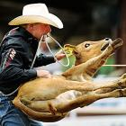 Steve Lloyd from Alix, Alberta, flips a calf in the Tie-Down Roping event during the Calgary Stampede on July 14. Lloyd was competing to get into the final day of the annual rodeo, the richest one day event in rodeo, which gives away over one million dollars in prize money.