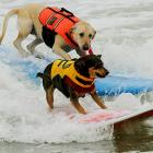 The dog days of summer gone, Abbie (right) and Cali (left) caught a final few waves at Huntington Beach in California.