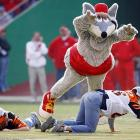 K.C. Wolf is a busy man.  When not rallying fans at the Red Sea, he appears at minor league baseball games, parades, grand openings and numerous other events.  Luckily for Chiefs fans, K.C. Wolf always has time to body slam Cincinnati Bengals fans.