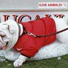 NCAA's Top Real Animal Mascots