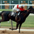 From her first record-setting race as a two-year-old filly, Ruffian enthralled racing fans, dominating the sport in the 1970s. She swept the Triple Tiara series and clocked remarkable speeds, often beating her competition by eight lengths or more. Sadly, Ruffian's career came to a tragic end when she broke down on the backstretch at Belmont Park during a $350,000 battle of the sexes race against Foolish Pleasure. She was euthanized later that night.