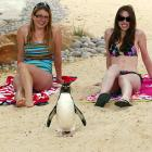 Our spies insist this photo is of Penguin captain Sidney Crosby chilling with Evelyn Guyett (left) and Rowena Fisher at the opening of the new London Zoo penguin pool and beach on May 26. Now you know why our spies were laughed out of the CIA.