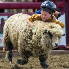 When it comes to wild and wooly sports, Mutton Bustin' in Lathrop, CA is about as good as it gets, although contestants often feel they've been fleeced when they don't win.