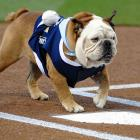 """What is meant when a pitcher is described as a """"bulldog."""" Herewith, Tillman of the San Diego Padres goes after the Arizona Diamondbacks at aptly named Petco Park on July 27."""