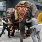 Not to be outdone by cyclists, MMA fighters, Mexican wrestlers, crocodiles, divers or sardines, two fellas in Budapest took on an elephant that tried to escape. Looks a lot like what's been going on between the Democrats and Republicans in the debt ceiling mess, don't it?