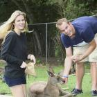 Roddick and Brooklyn Decker feed kangaroos during a media event at Lone Pine Koala Sanctuary in Brisbane. The couple have been married since April 2009.