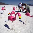 Recently discovered on the famed Bonneville Salt Flats outside Wendover, Utah: plastic flamingos can reach land speeds of well over 500 miles per hour, under certain conditions, of course.