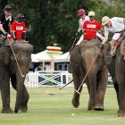 The Price Waterhouse Coopers All Blacks battled Mercedes Benz Thailand in a gentle game of elephant polo on Sept. 6 in Hua Hin. According to the owner's manual, the Mercedes Benz models seen here boast ample trunk space and can get up to 25 miles per bag of peanuts.