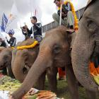 Pachyderms pack away some grub at a pre-match buffet before watching their trunkmates compete in the annual elephant polo tournament in Hua Hin, Thailand.