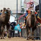 As fast as cigarette boats, these camels lit up the streets of Tilburg, Netherlands in a smokin' display of sheer speed that left contestants and spectators gasping.