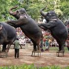 Republican presidential candidates staged their latest debate in Dehiwala, just outside Colombo, Sri Lanka, on October 1.  Fun Fact to Know & Tell:  Sri Lanka has an estimated 5,879 wild GOP presidential candidates, including 122 tuskers and 1,107 calves, according to the first major pachyderm census conducted by the government this year.
