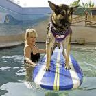 Heidi the German Shepherd came to grips with the vicissitudes of surfing during a lesson in the training pool at the aptly-named Barkley Pet Hotel & Day Spa in Westlake Village, CA.